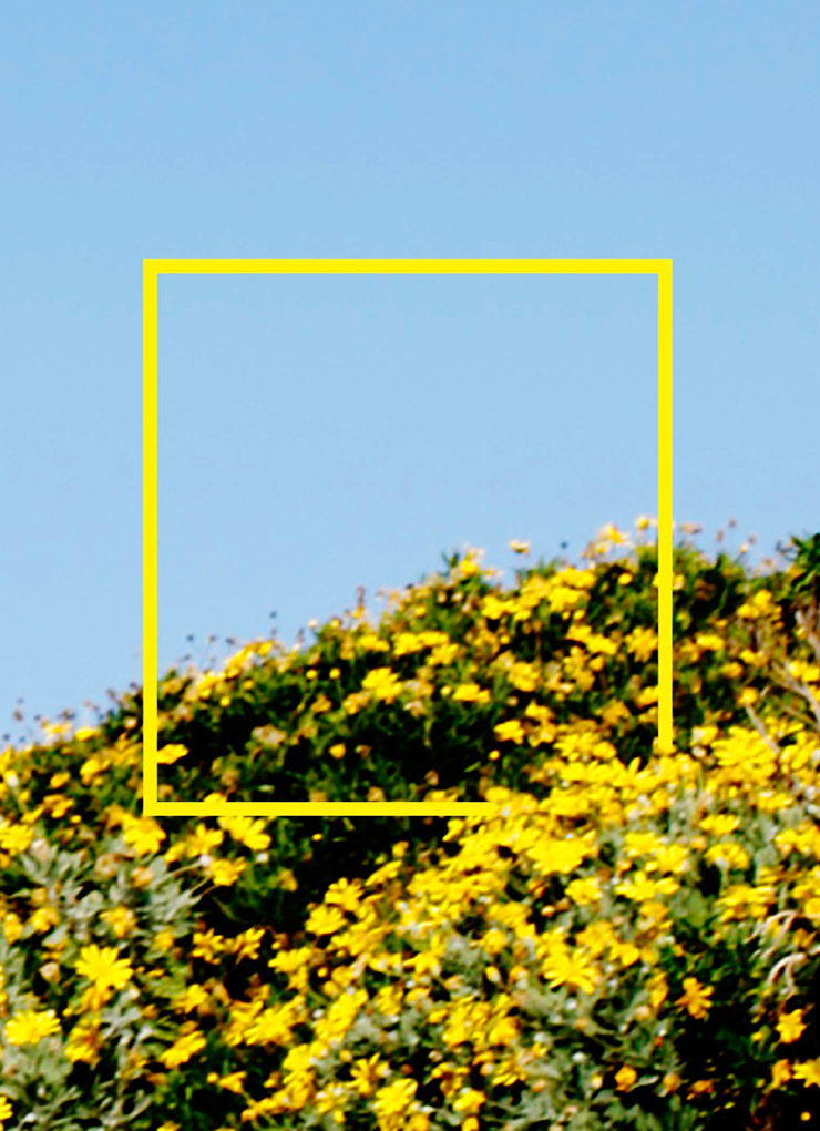 Yellow & Blue. Art Series that explores the interplay between two colors and a single image.
